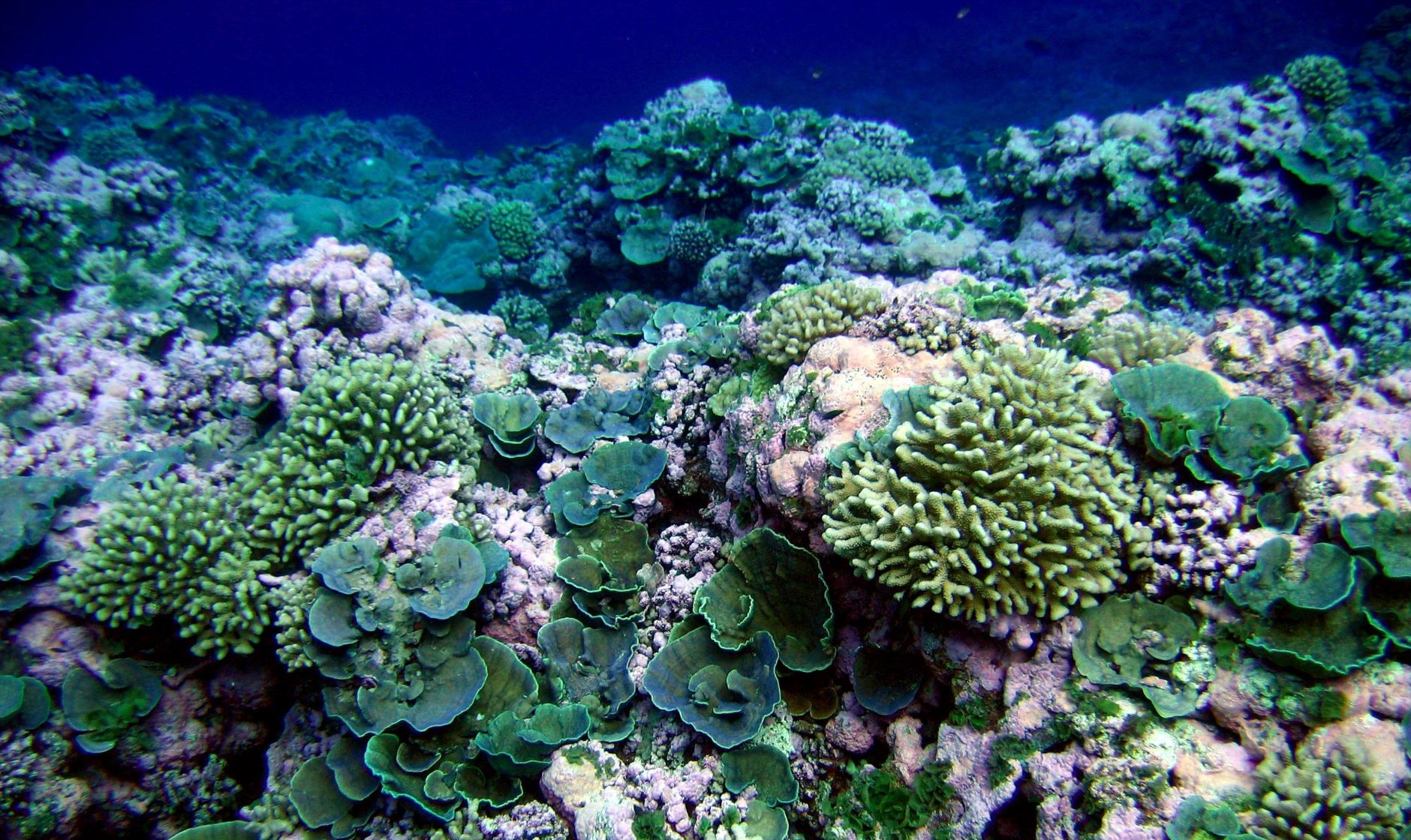 A healthy coral reef at Swains island, American Samoa. - Image Credit:  NOAA/NMFS/PIFSC/CRED, Oceanography Team. ,  CC BY