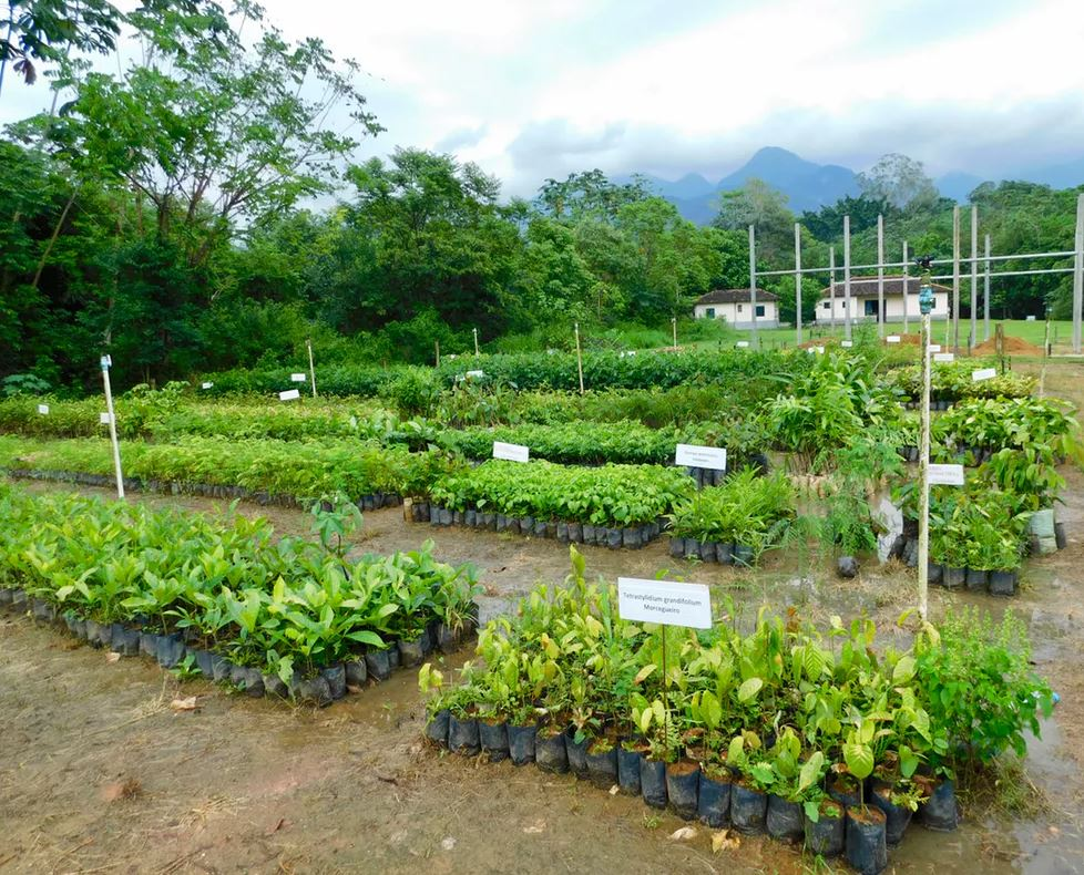 A native tree nursery for large-scale restoration of Atlantic Forest at Reserva Natural Guapiaçu, Rio de Janeiro State, Brazil. - Image Credits: Robin Chazdon,  CC BY-ND