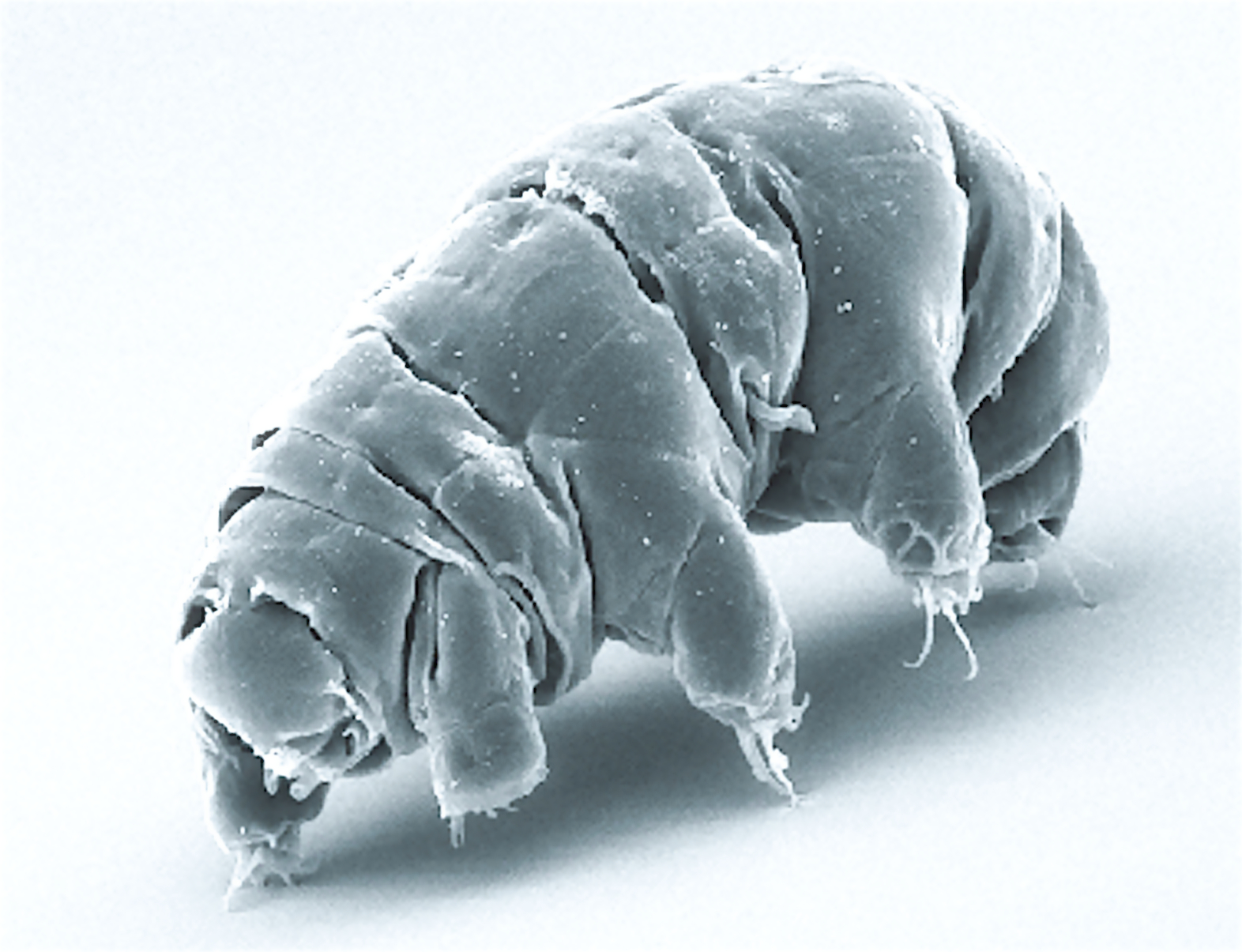 Tardigrades: we're now polluting the moon with near indestructible little creatures