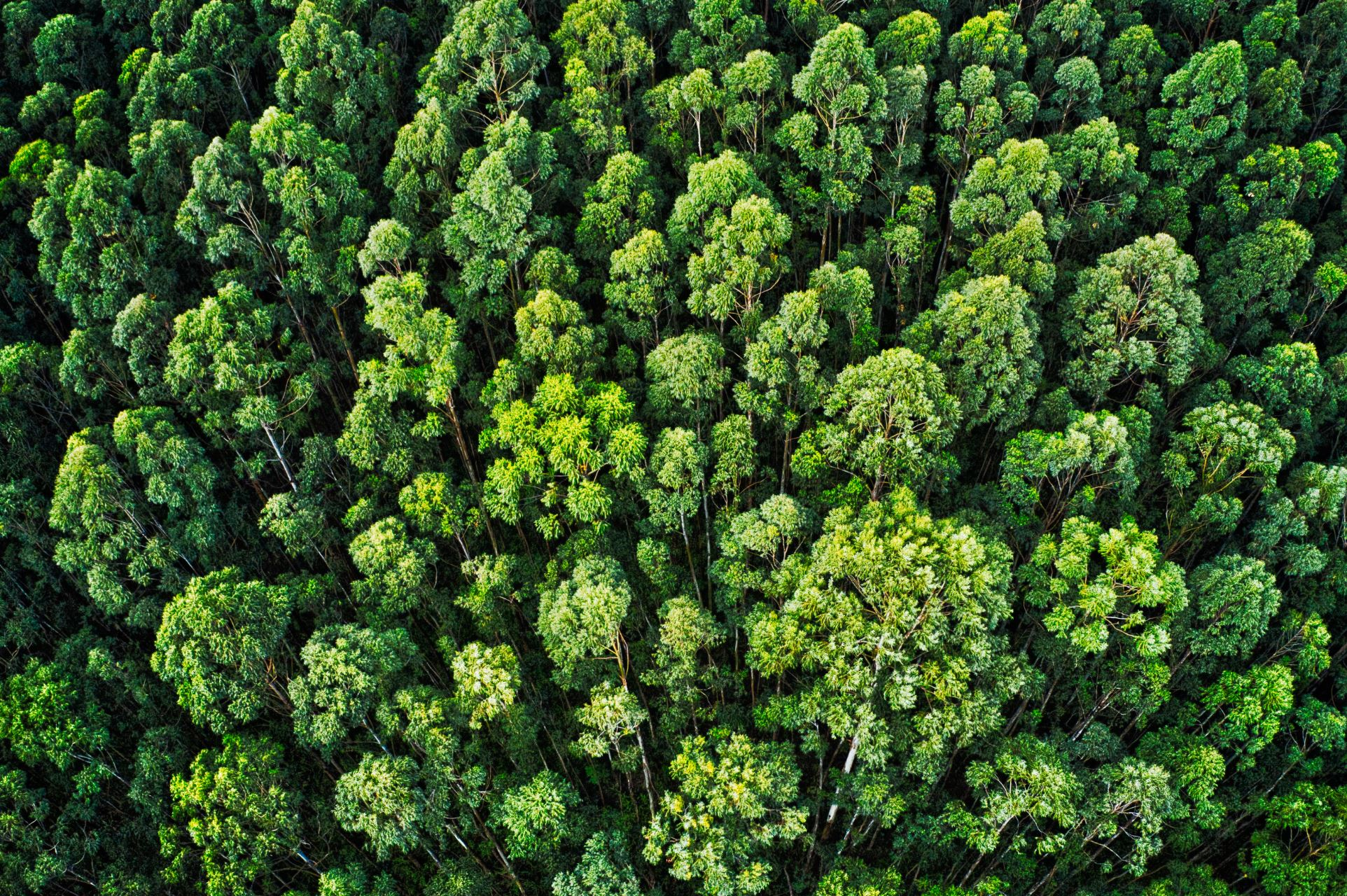 A dense forest. There might be more going on here than meets the eye - Image Credit:  Jakub Gorajek via Unsplash  -  HDR tune by Universal-Sci