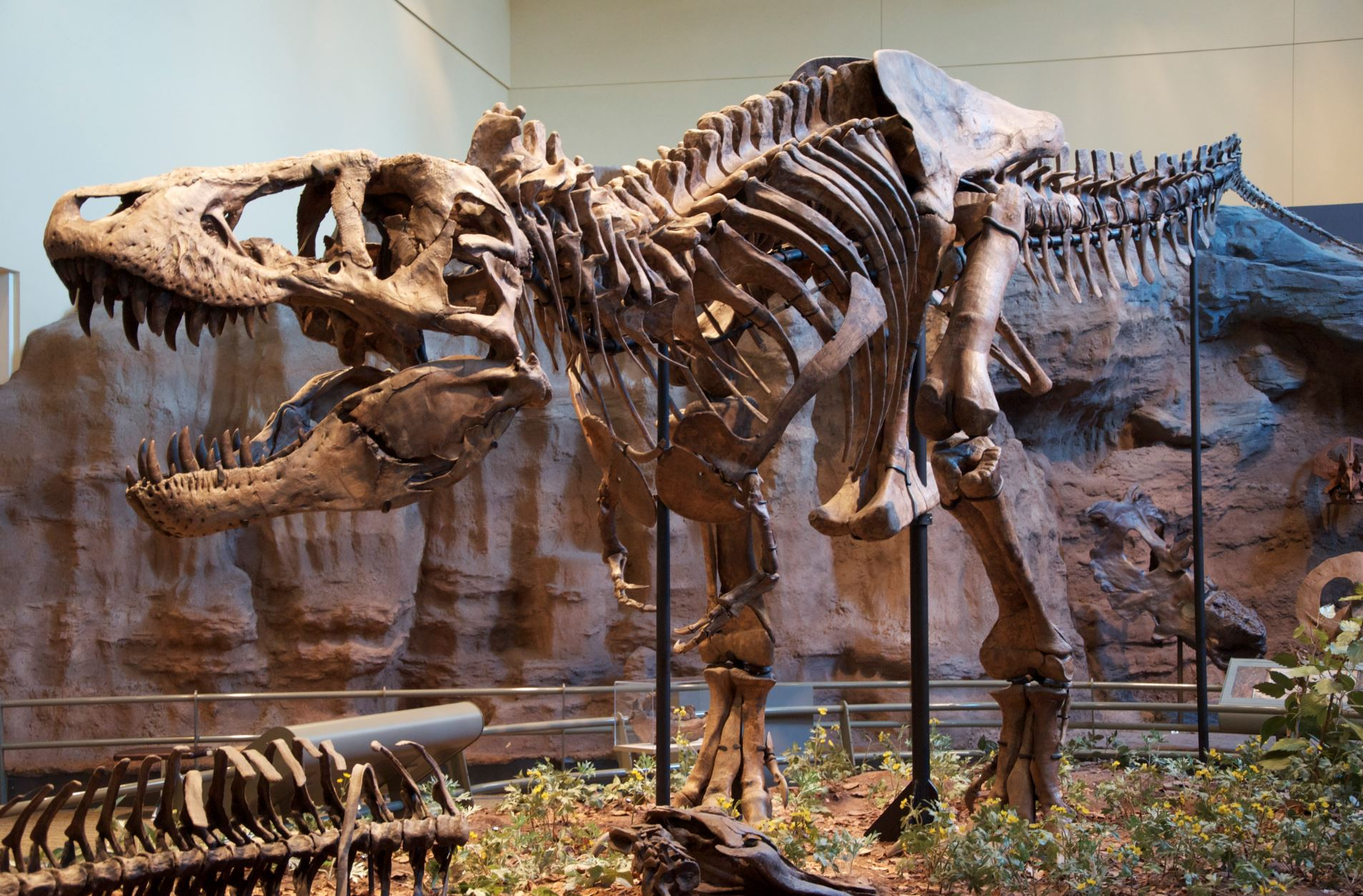 The massive T-rex is a sight to behold. Here seen at the Carnegie Museum of Natural History in Pittsburgh - Image Credit:  ScottRobertAnselmo via Wikimedia Commons