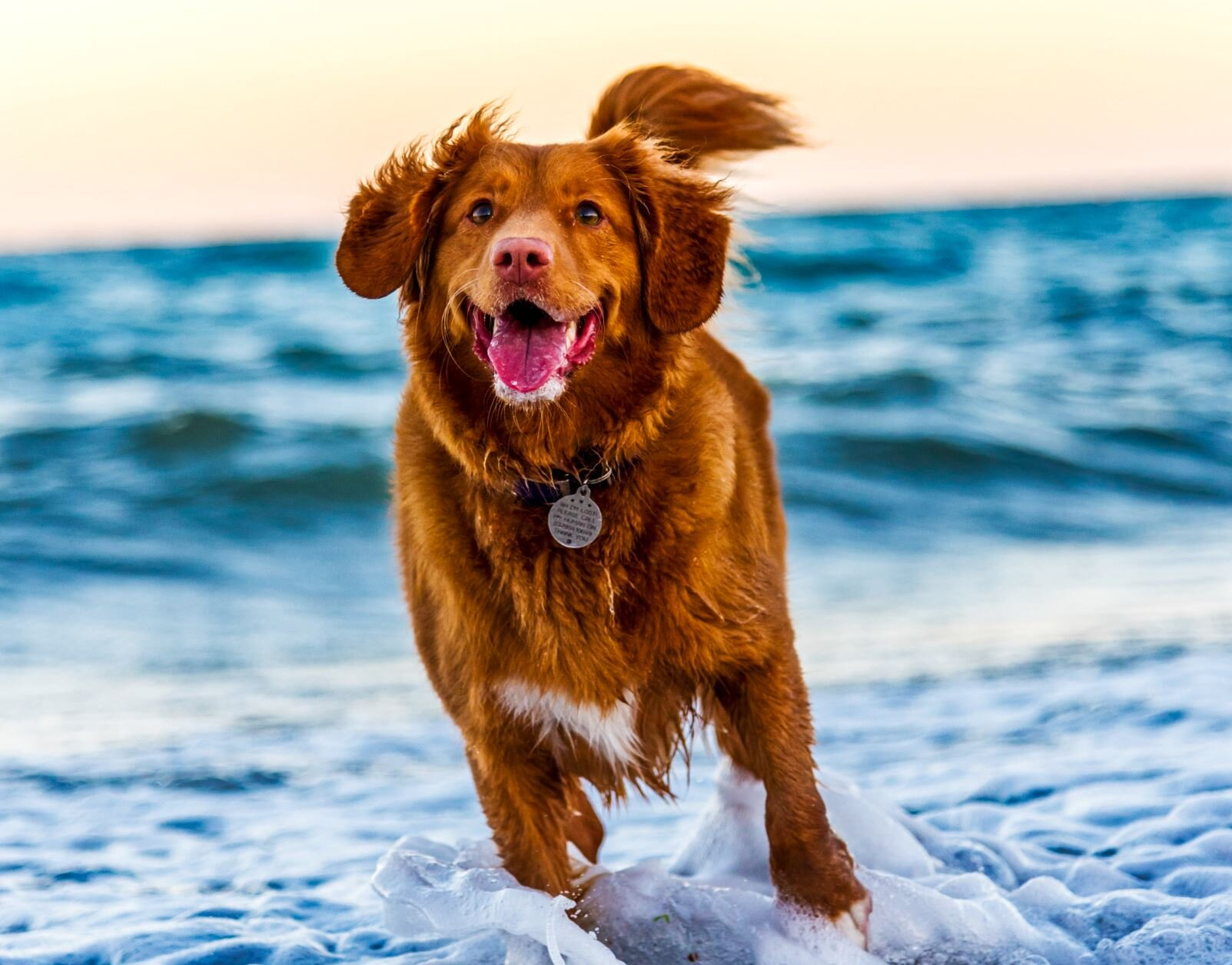 Owning a dog is linked to more physical activity and social interaction - Image Credit:  Oscar Sutton via Unsplash  - HDR tune by  Universal-Sci