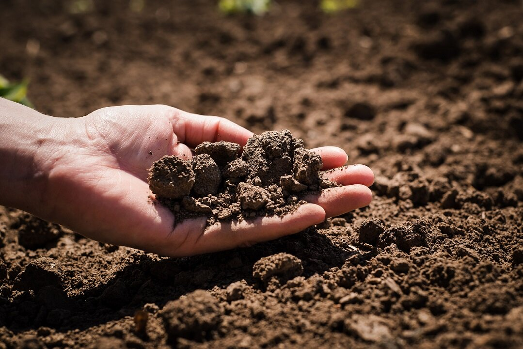 Soil biodiversity in danger: why it is crucial to protect what lies beneath our feet