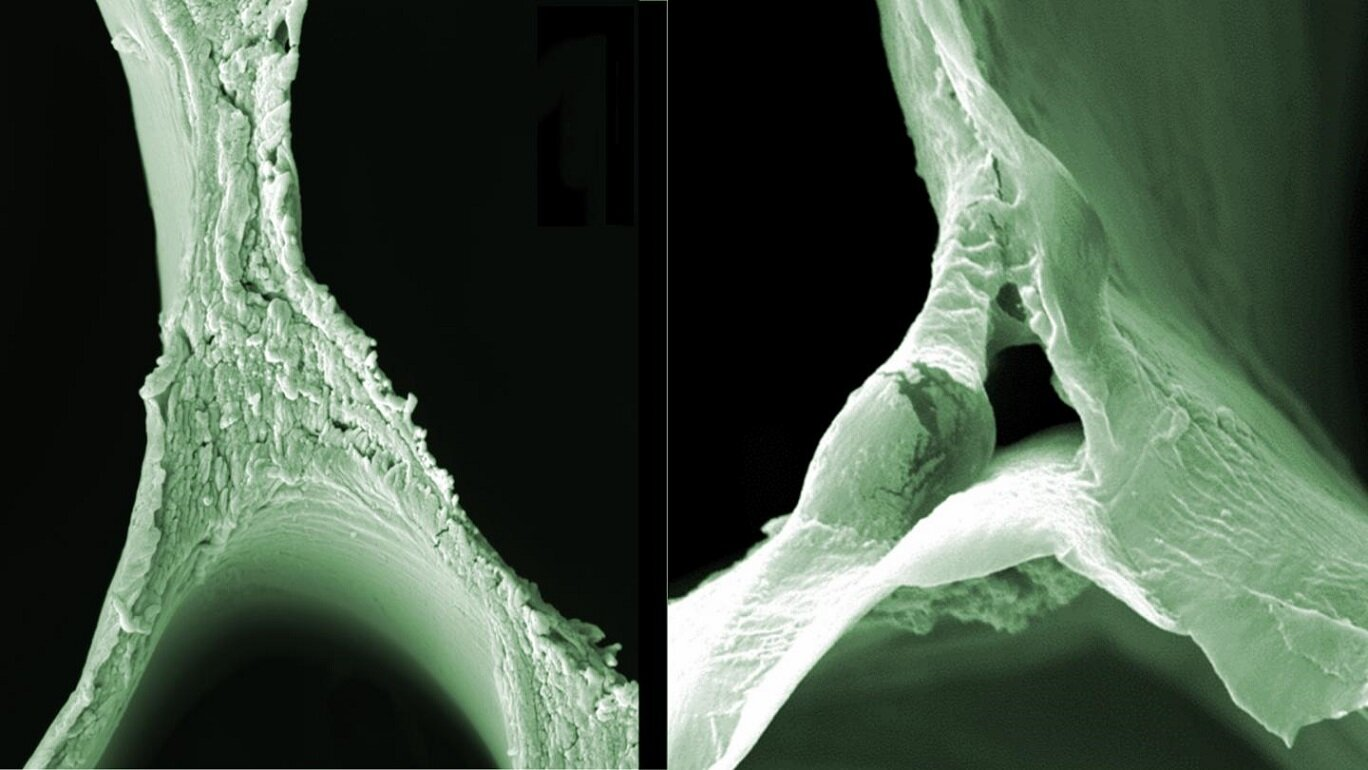 Images obtained by a scanning electron microscope of balsa wood (left) and delignified wood (right) showing the structural changes. - Image Credit: ACS Nano / Empa via EurekAlert/AAAS