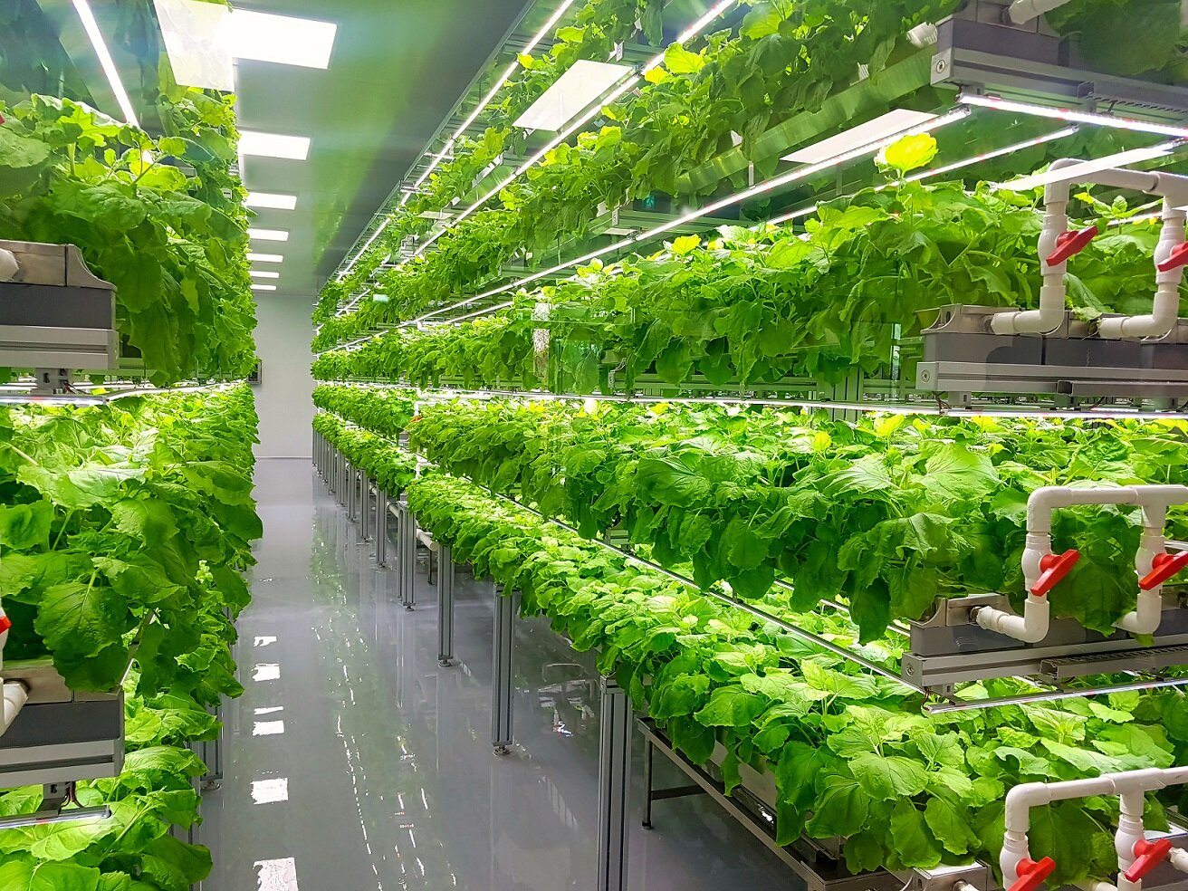 The future of agriculture: new high-tech vertical farm is capable of producing 10x more seed potatoes