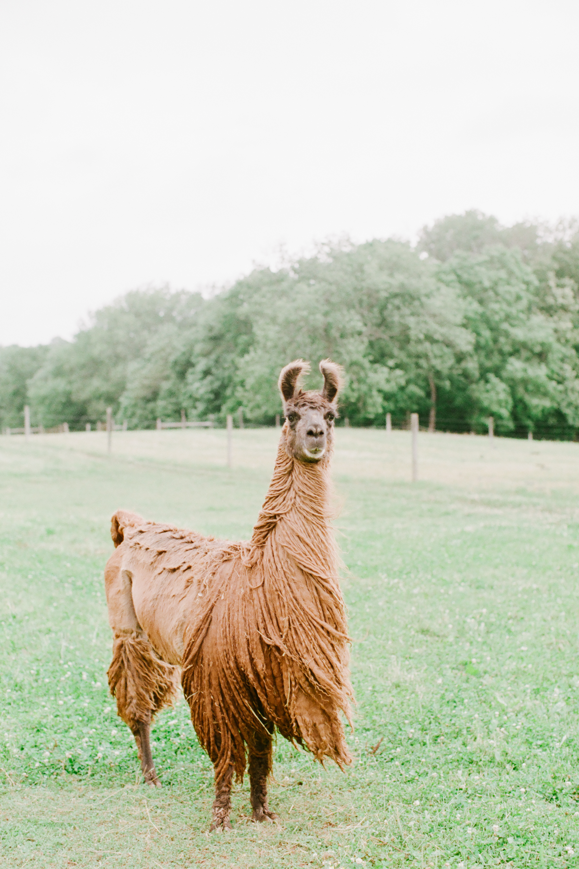 nj_alpaca-farm_wedding_inspiration-98.jpg