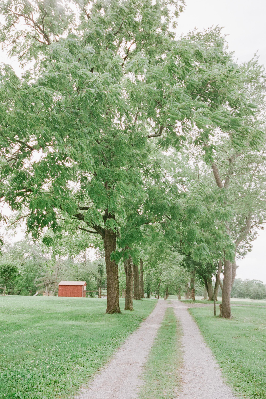 nj_alpaca-farm_wedding_inspiration-1.jpg