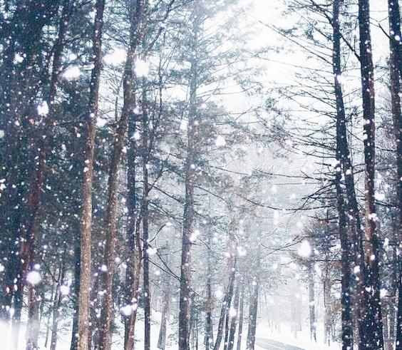 Winter Skin -