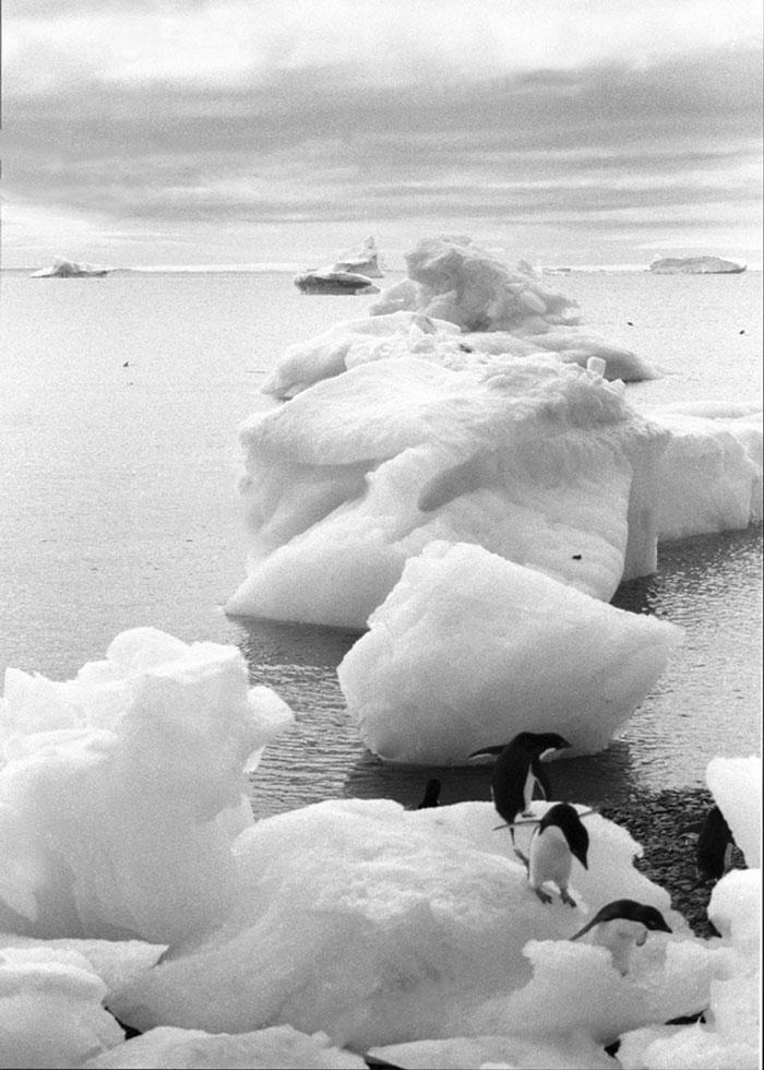 Penguin Perspective, Antarctica