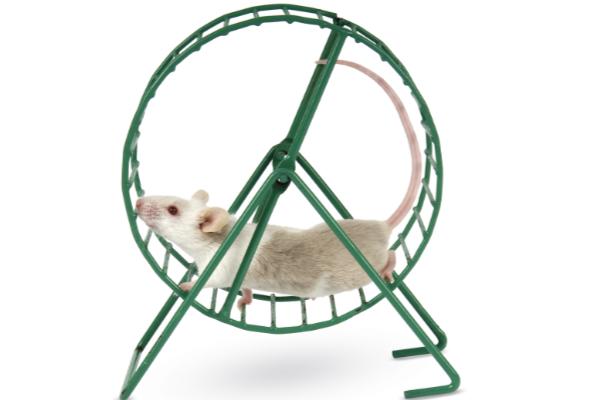 rat-wheel.jpg
