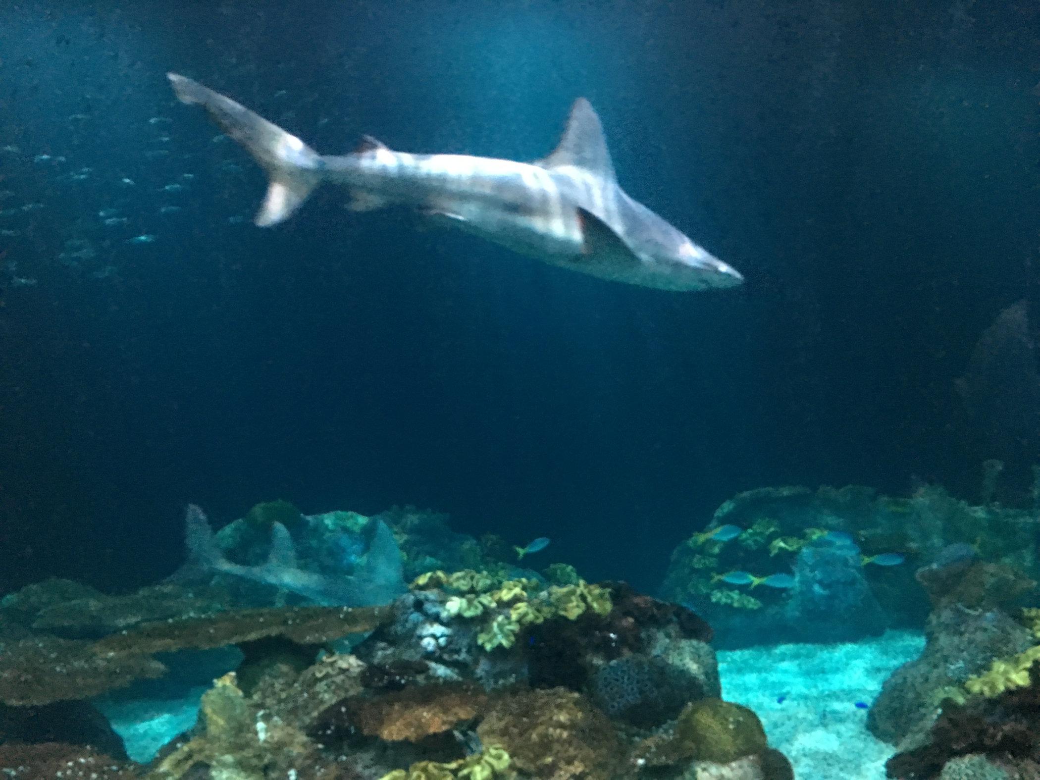 shark-day1.jpg