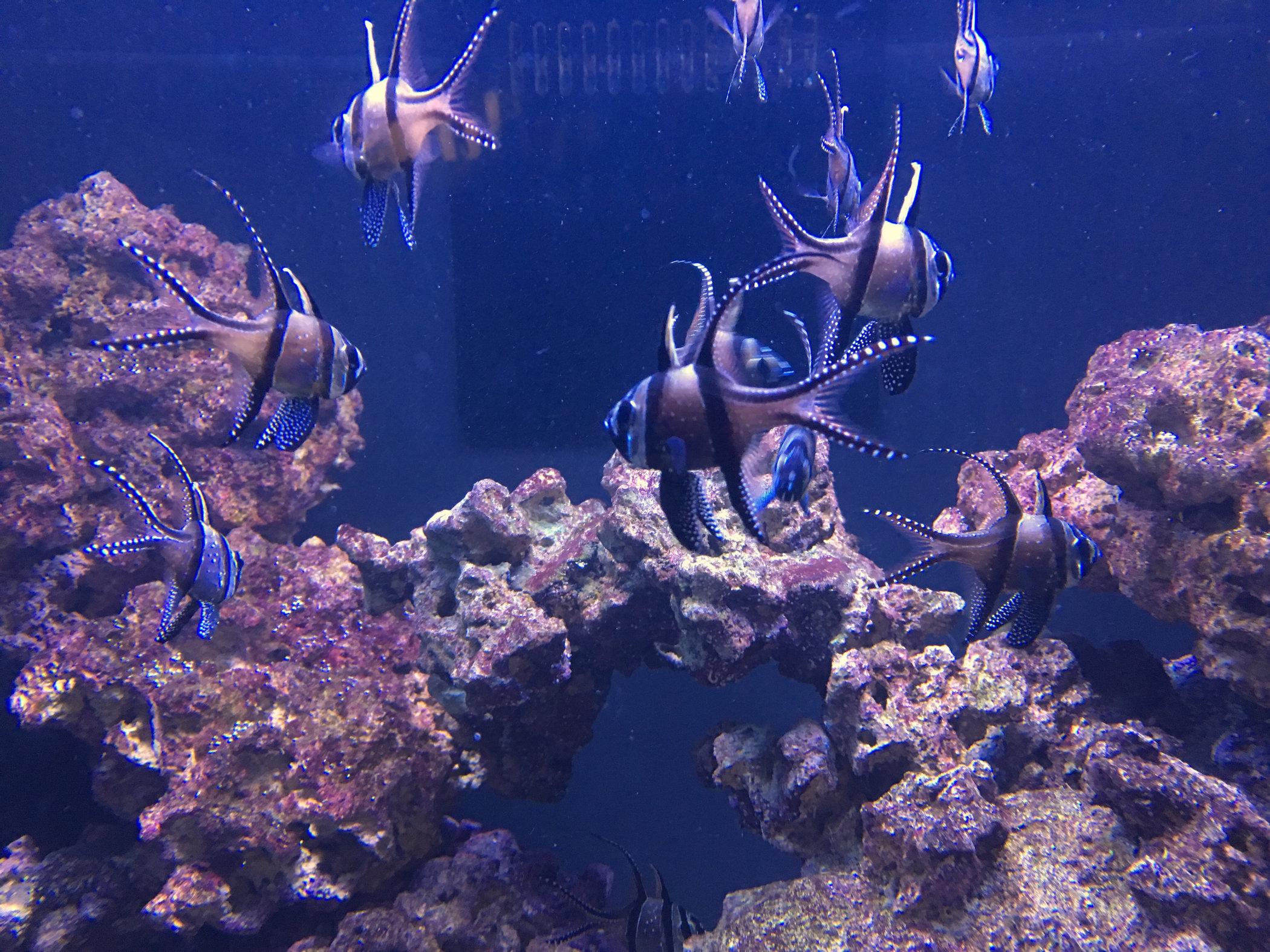 funny-fish1.jpg
