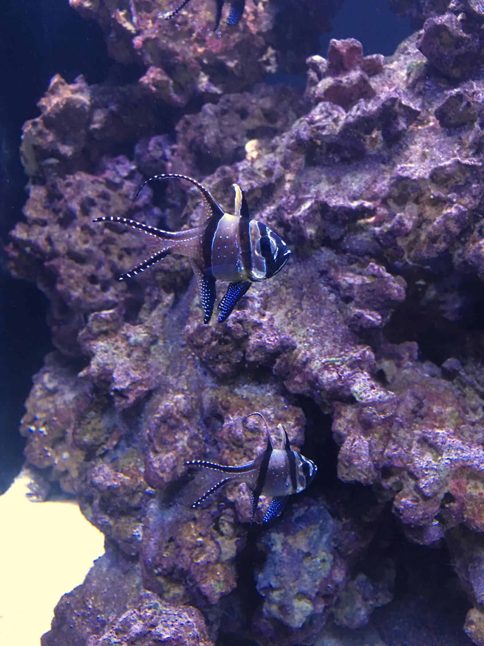 funny-fish2.jpg