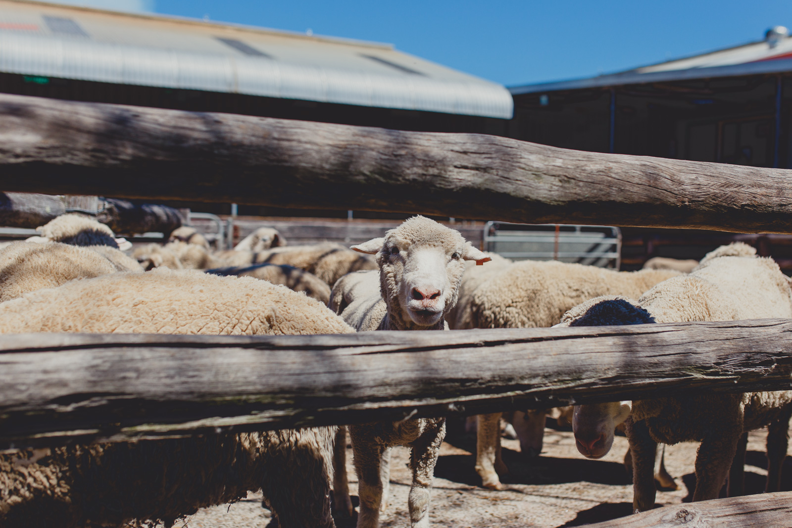 Tobruk-sheep-station-sydney-wedding (90).jpg