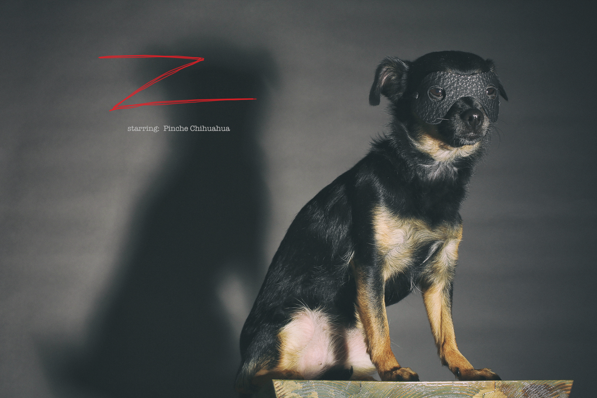 chihuahua1.jpg
