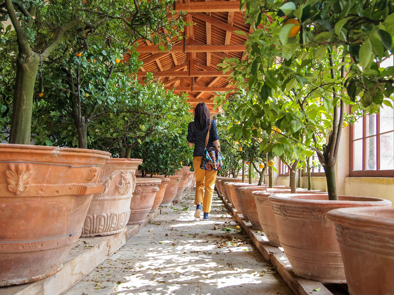 Enjoying the most beautiful scent of Limonaia in Villa Pisani