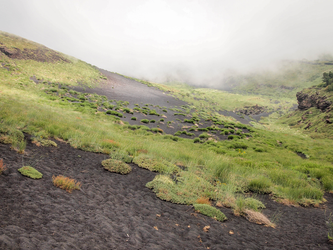 "Bright green ""islands"" on the dark volcanic soil"