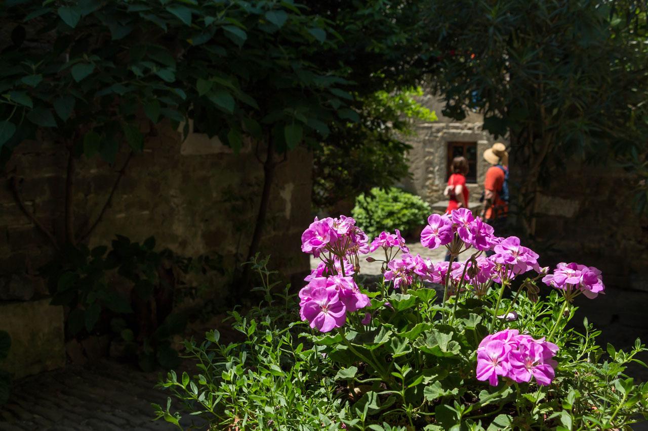 Groznjan-flowers