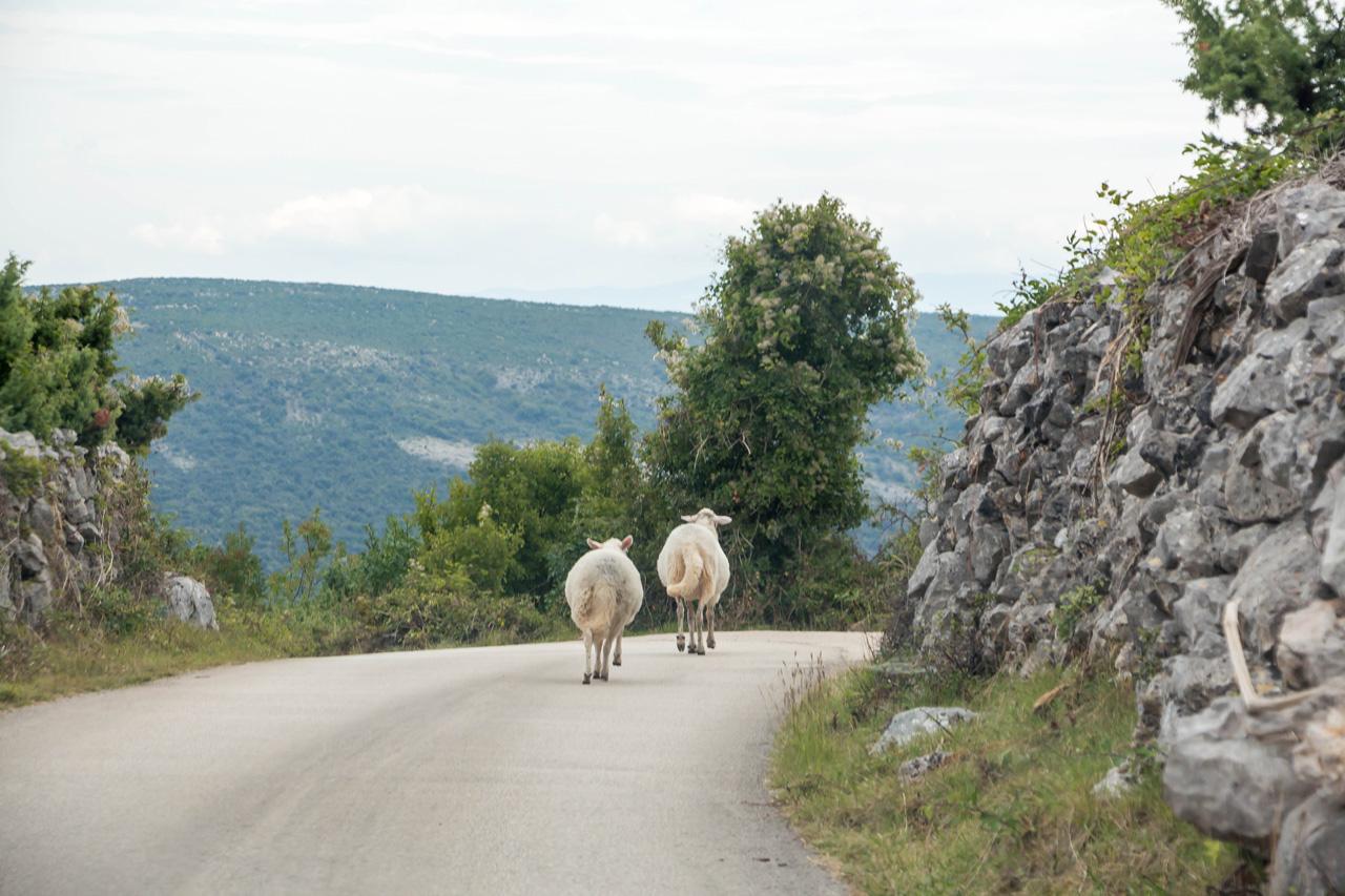 Cres-sheep