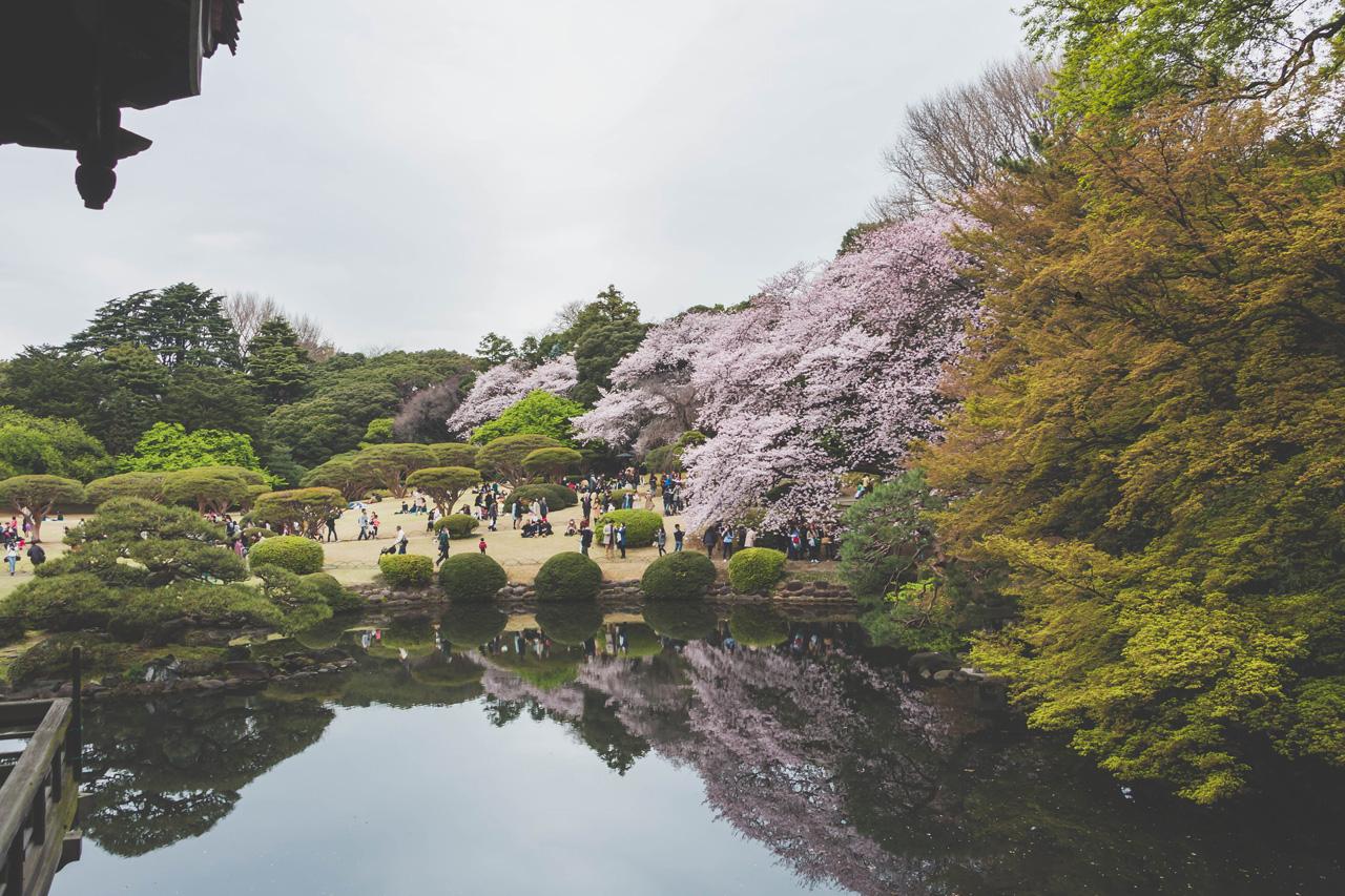 Shinjuku-national-garden