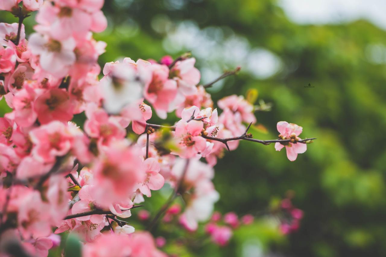 Spring-in-Japan