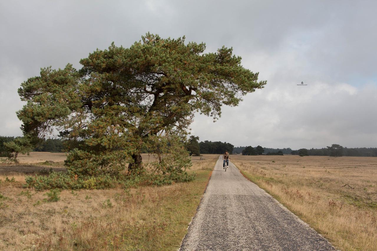 De-Hoge-Veluwe-park