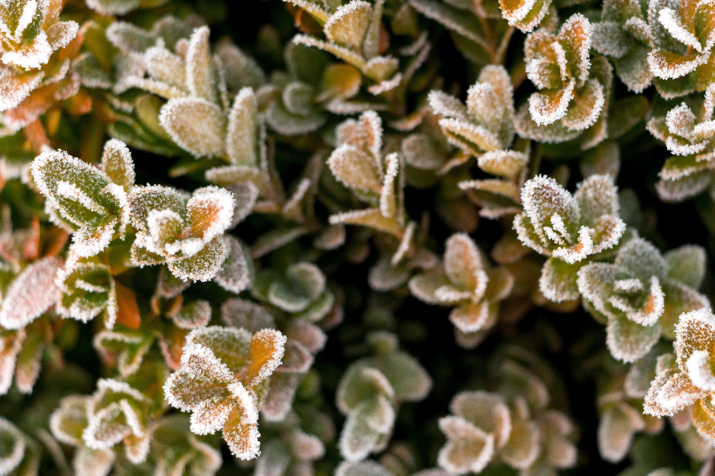 Frozen-nature