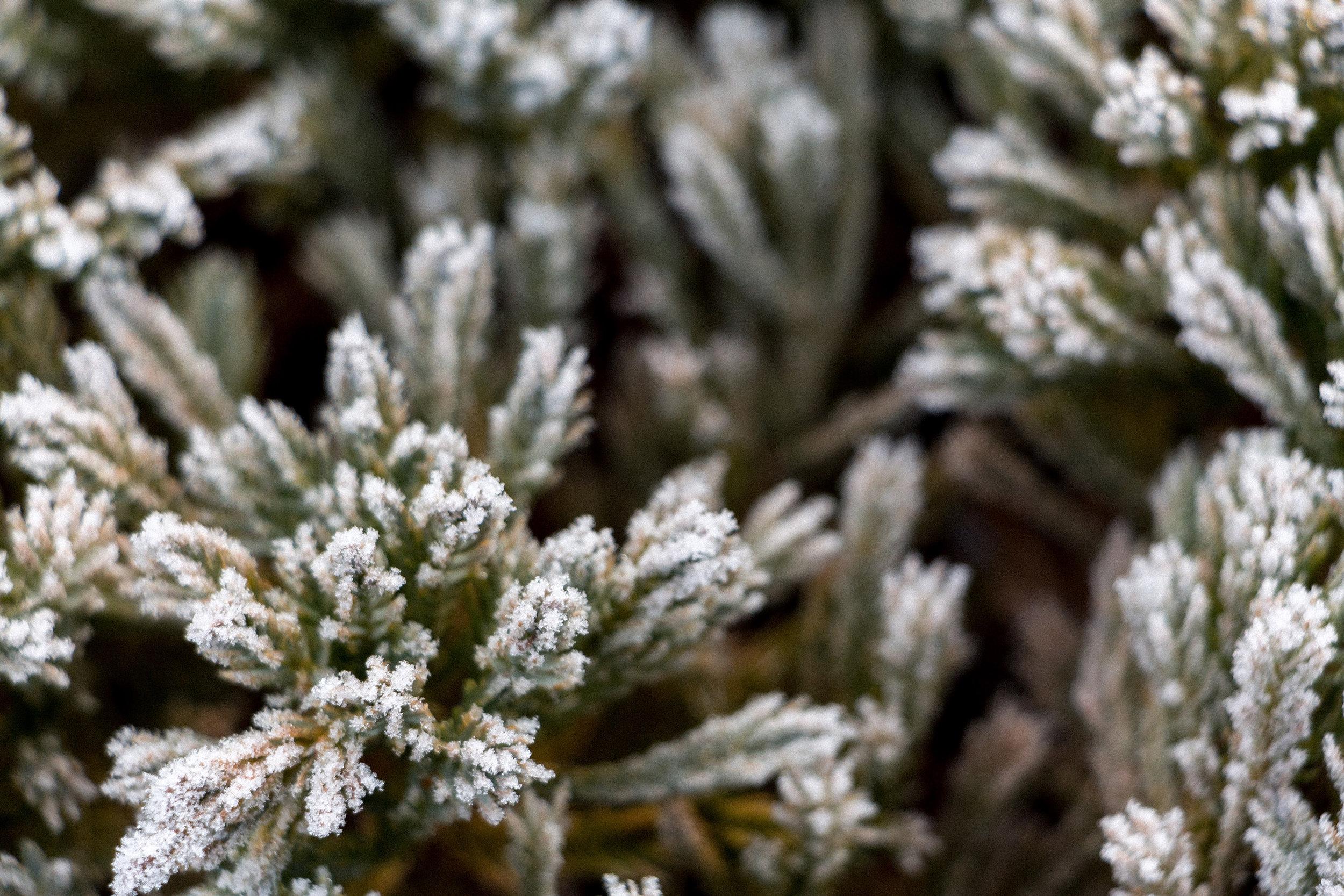 Nature-frozen