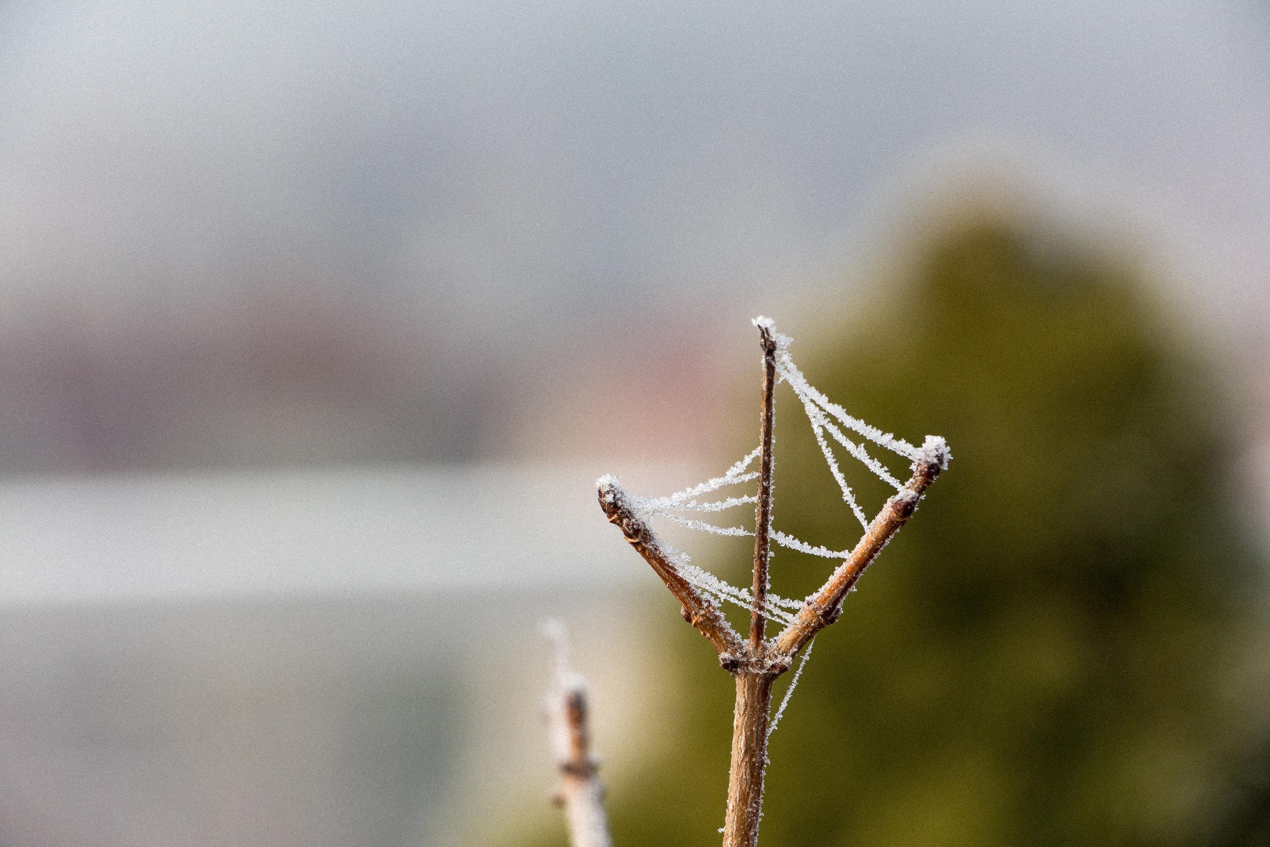 Frozen-spider-web