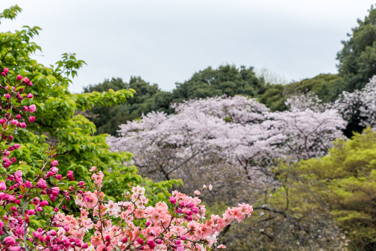 Shinjuku-Gyoen National Garden, Tokyo