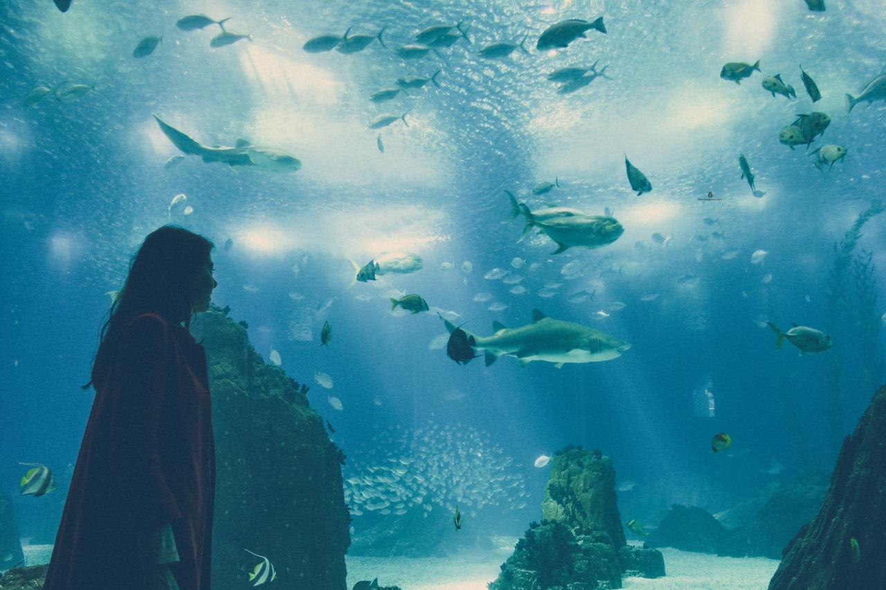 Lisbon-Aquarium