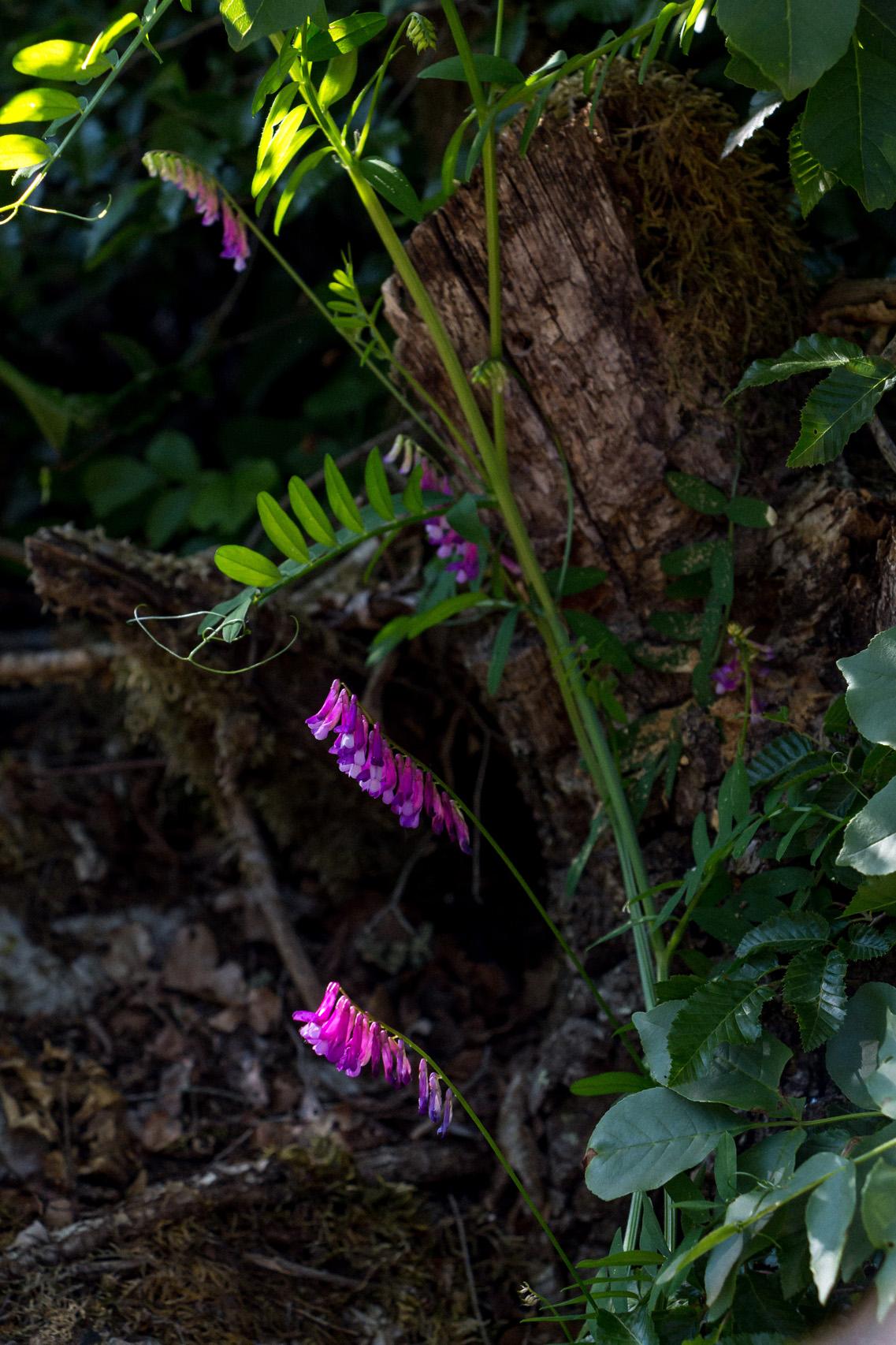 Istria-flowers