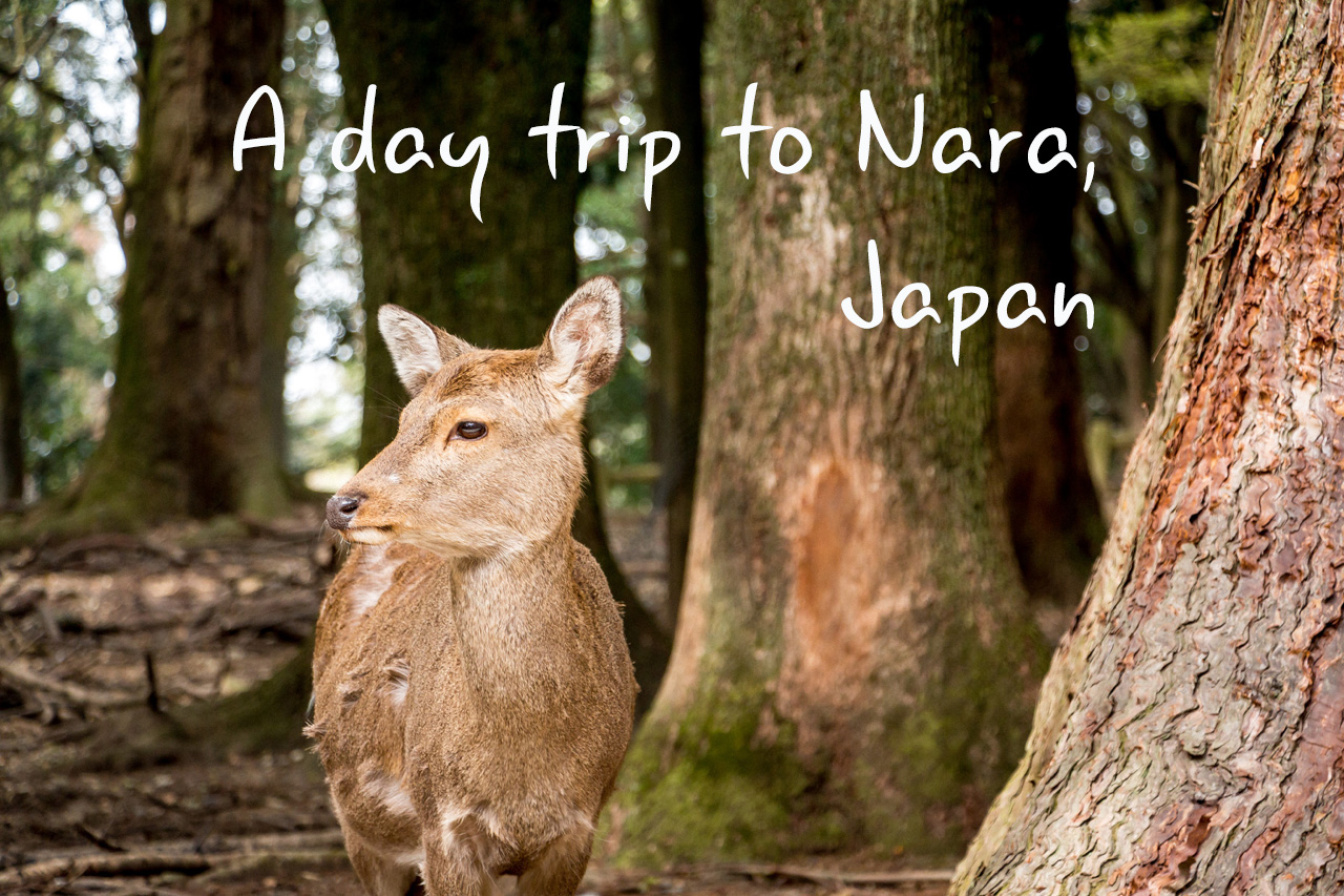 Nara-Japan