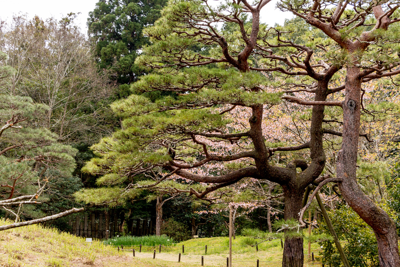 Manyo-garden-Nara