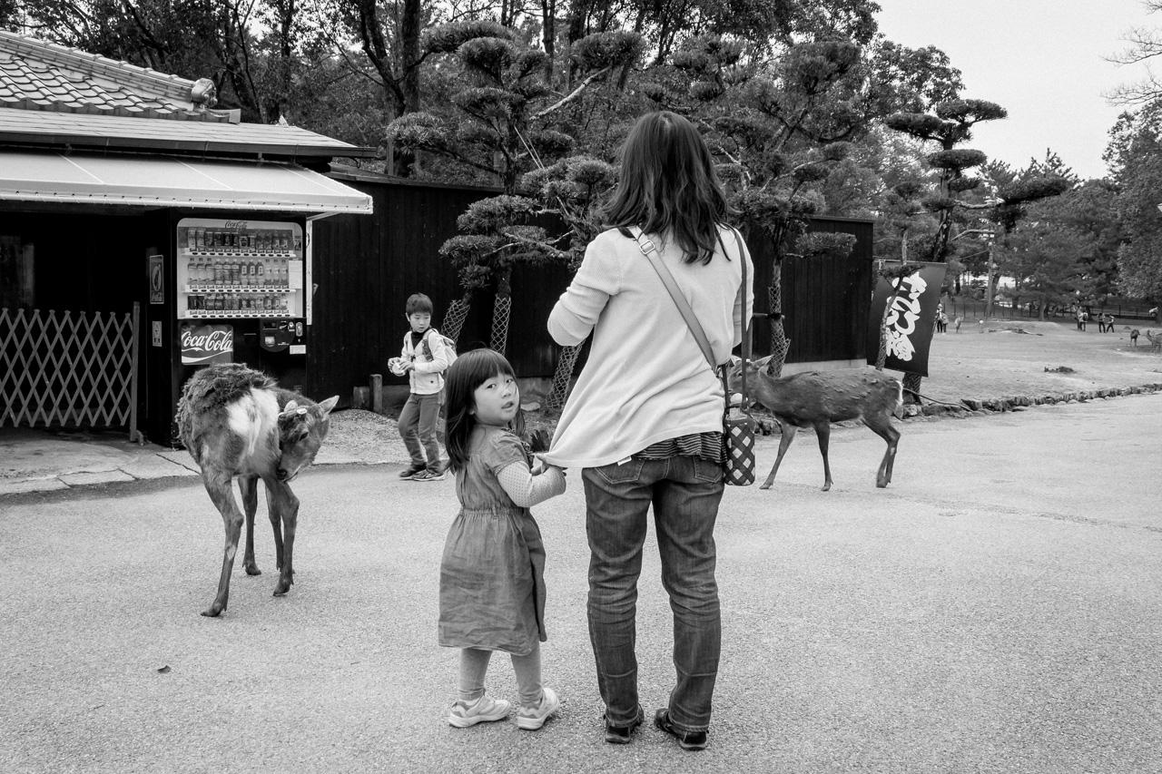 Deer-in-Nara