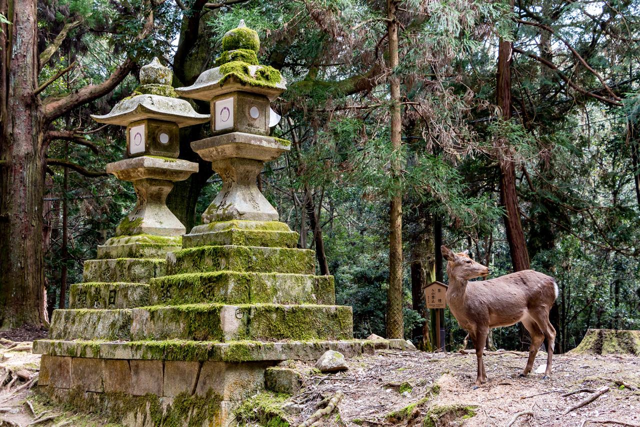 Kasuga-Taisha-shrine-Nara