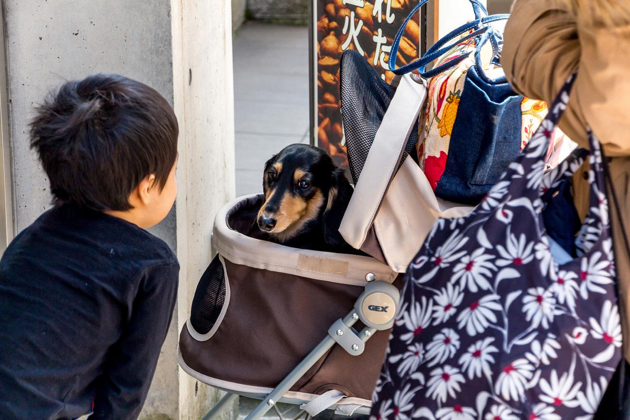Cute-dog-Kanazawa
