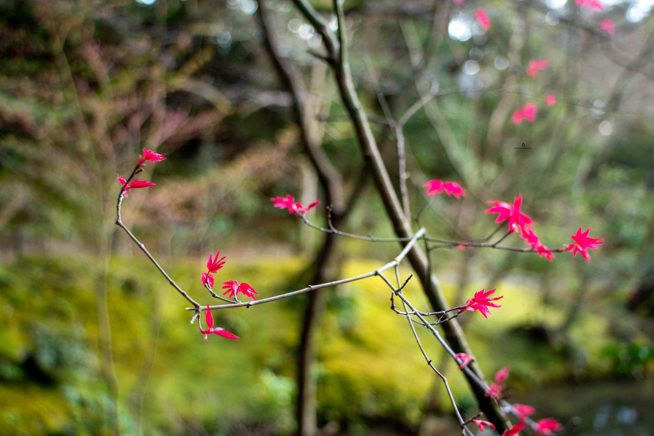 Kyoto-Nanzenin-garden
