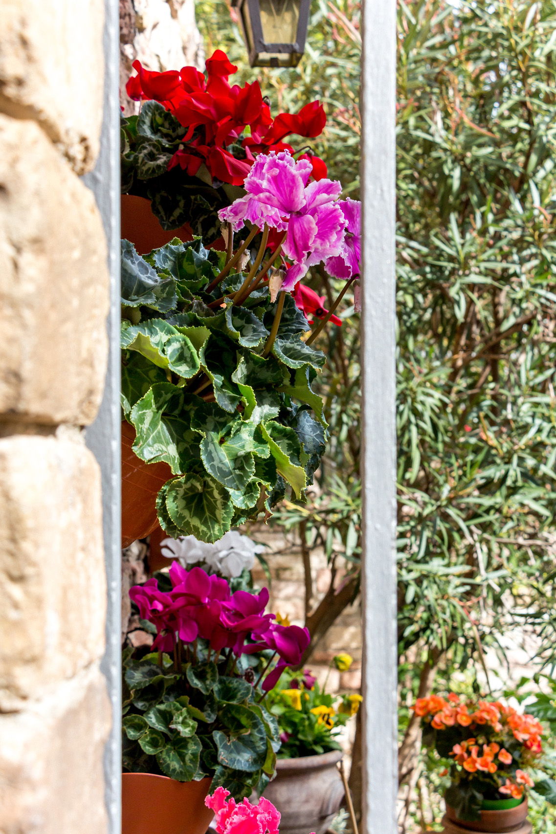 Flowery courtyard in Assisi, Umbria