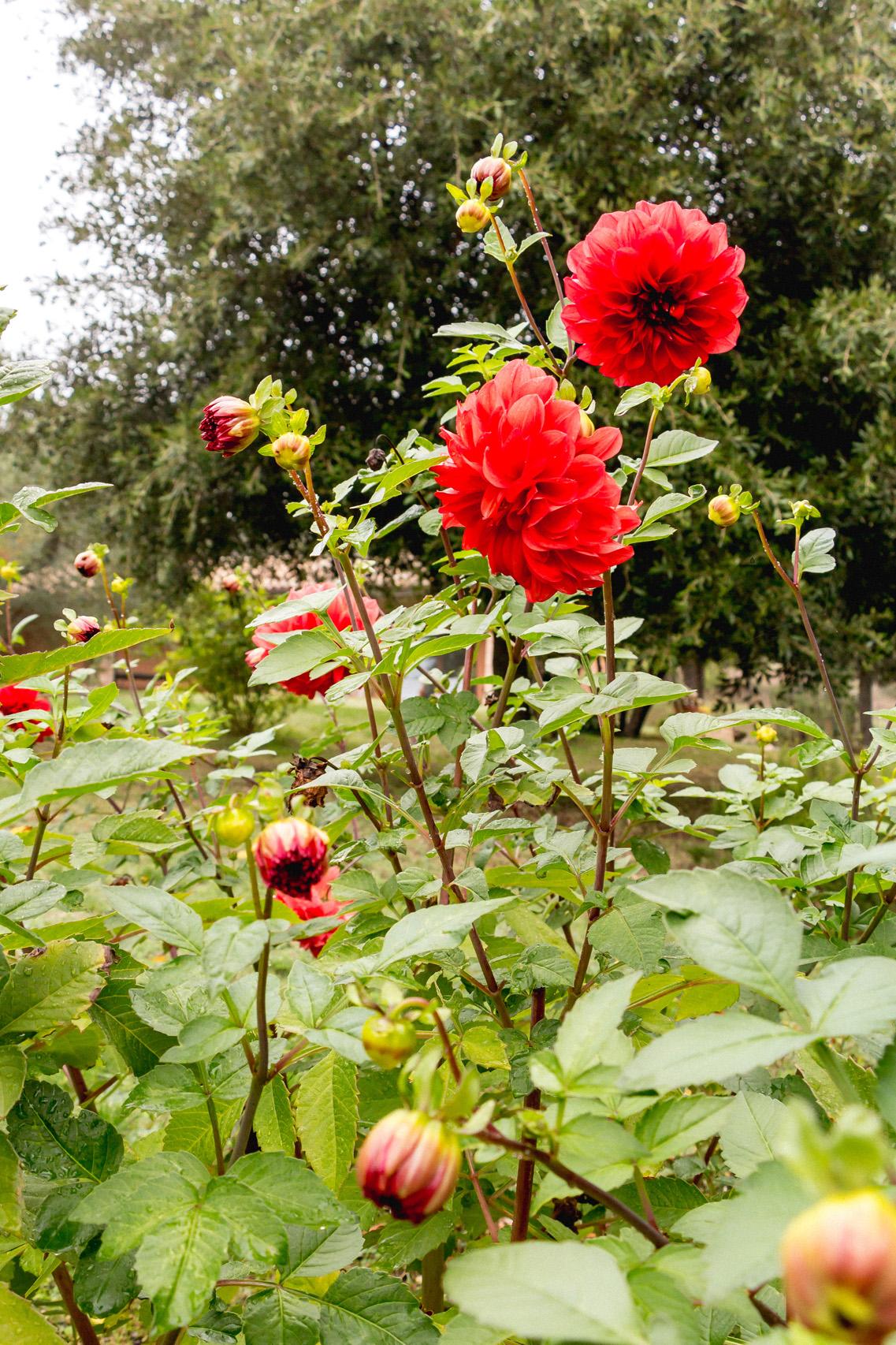 Roses, Umbria