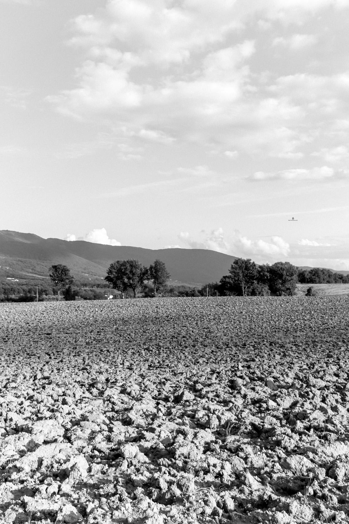 Fields near Todi, Umbria