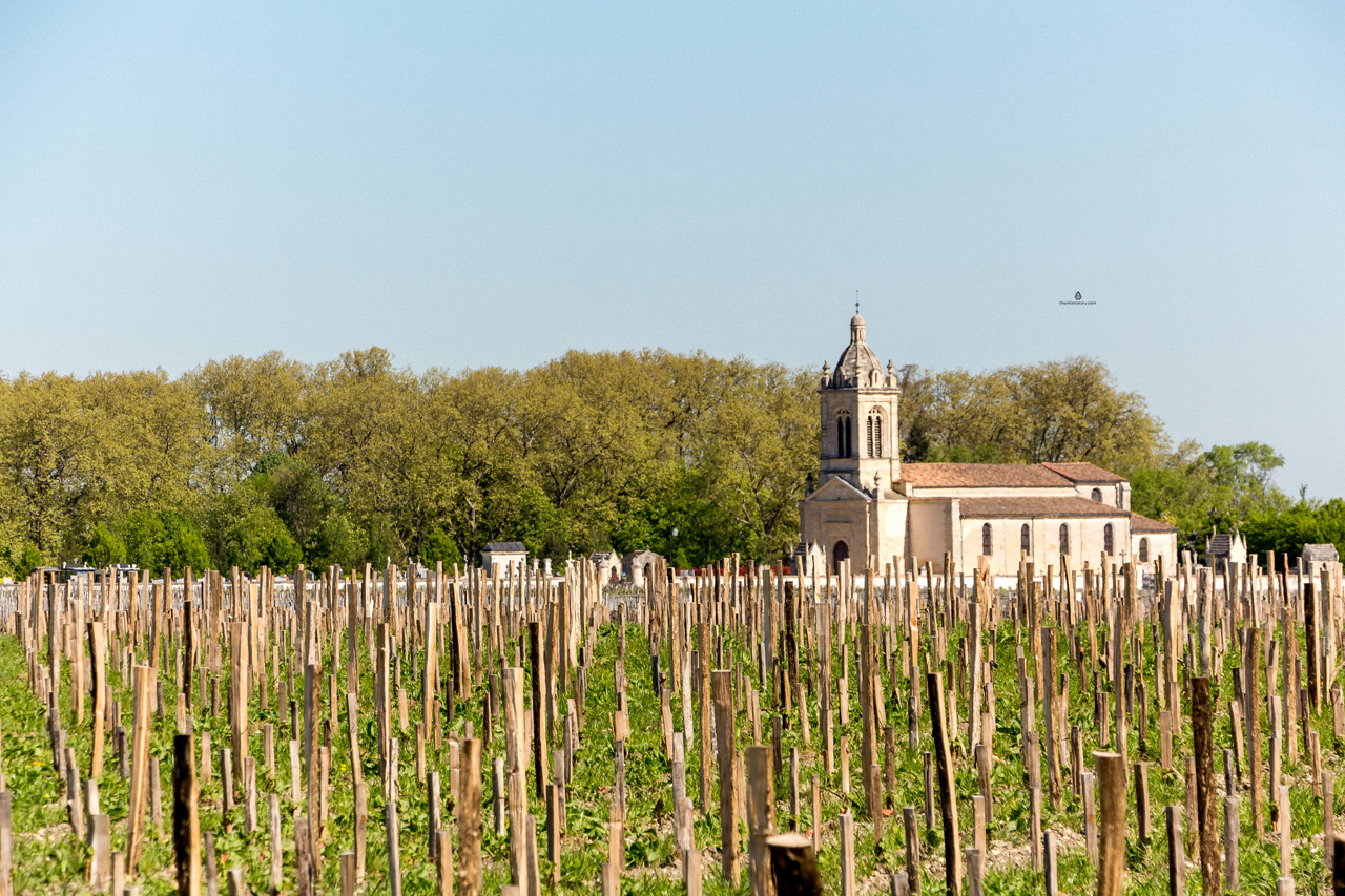 Vineyards in Medoc