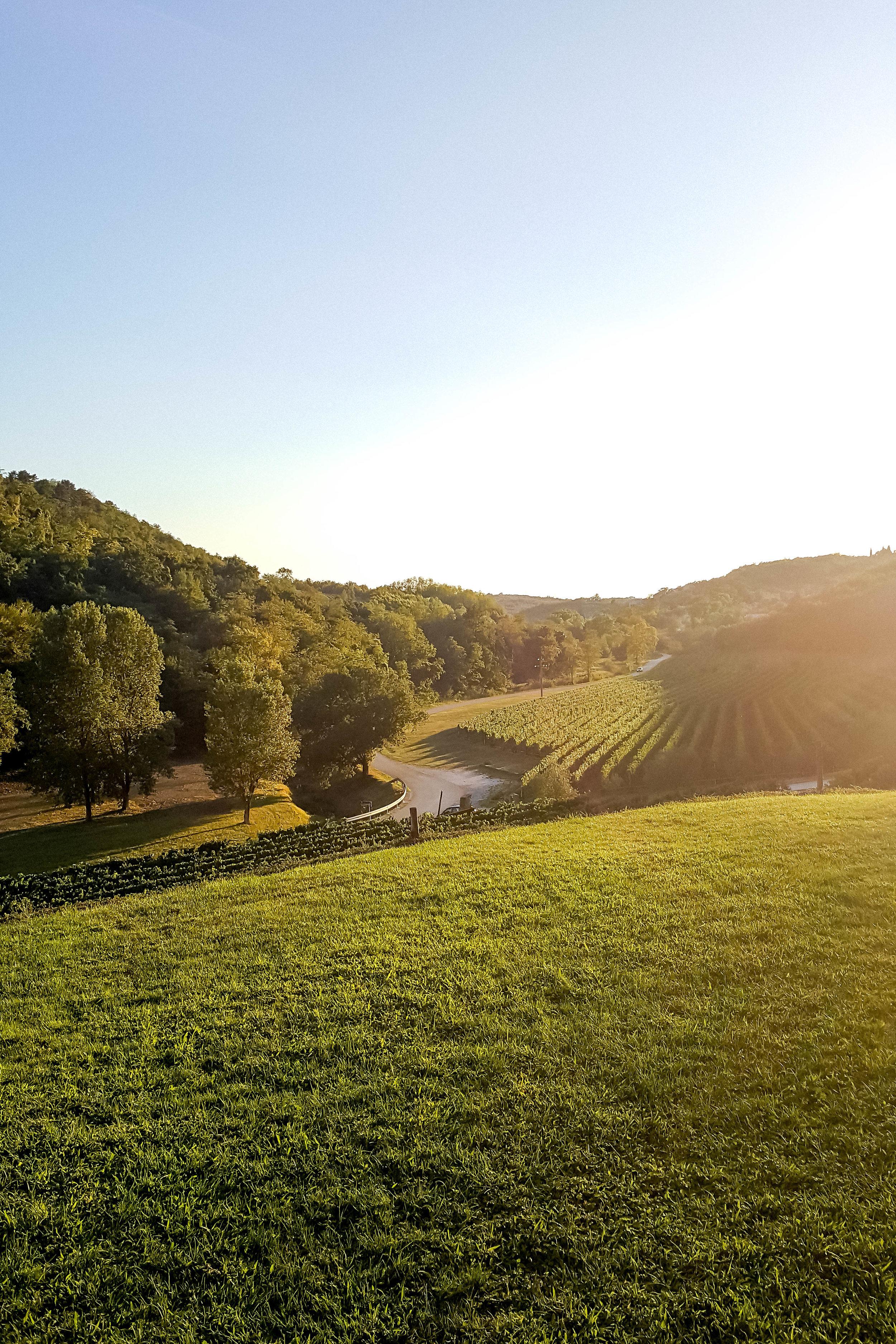 Vineyards below the town of Momjan, Istria