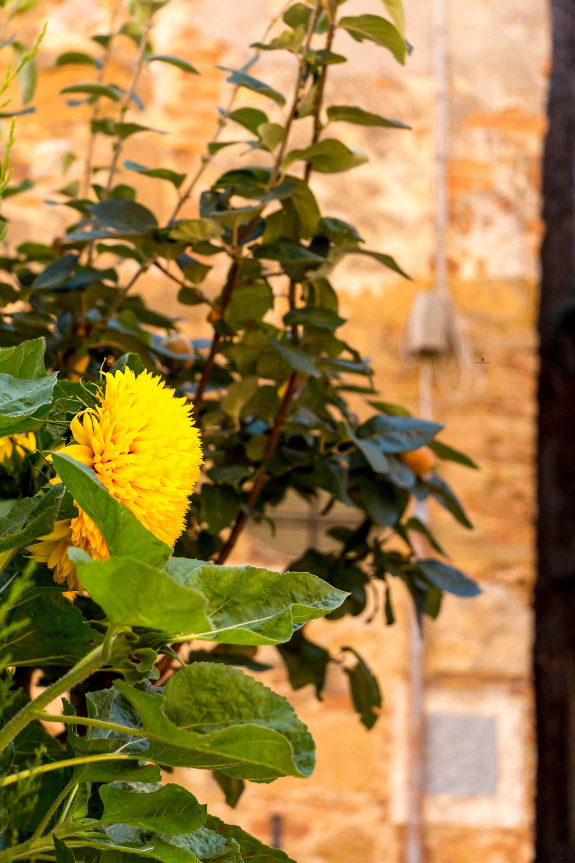 Flowery streets of Pienza, Tuscany