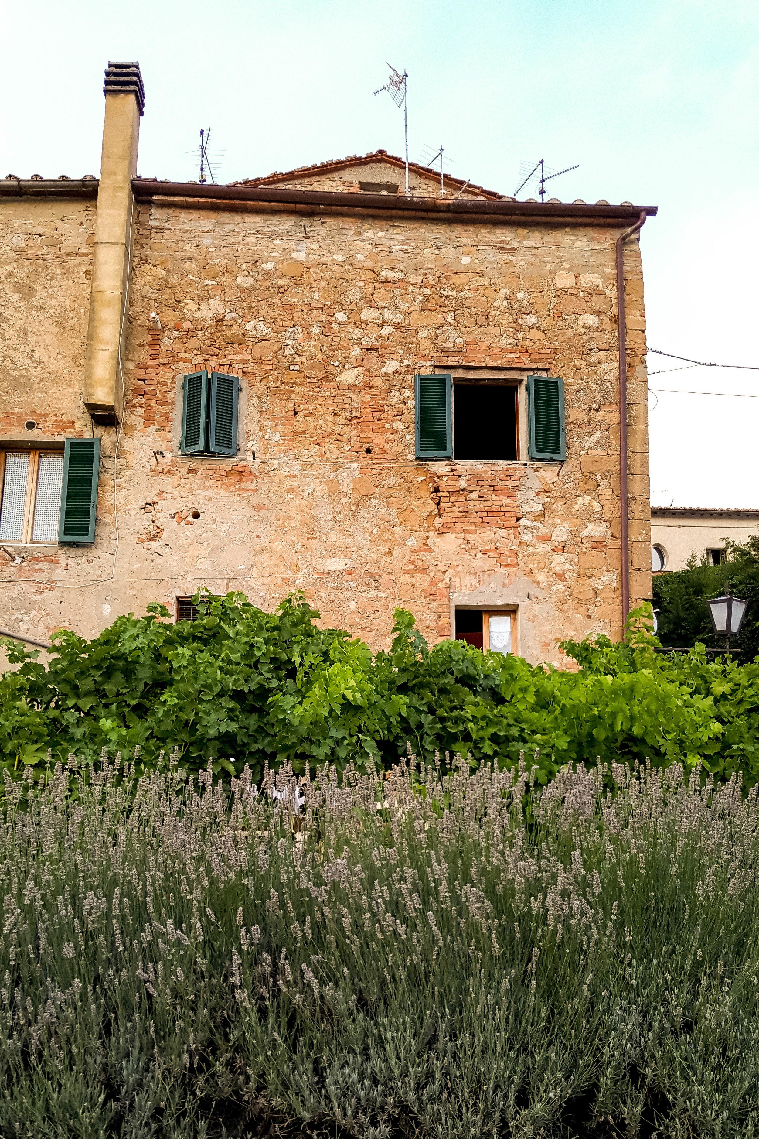 Lavender garden in Pienza, Tuscany