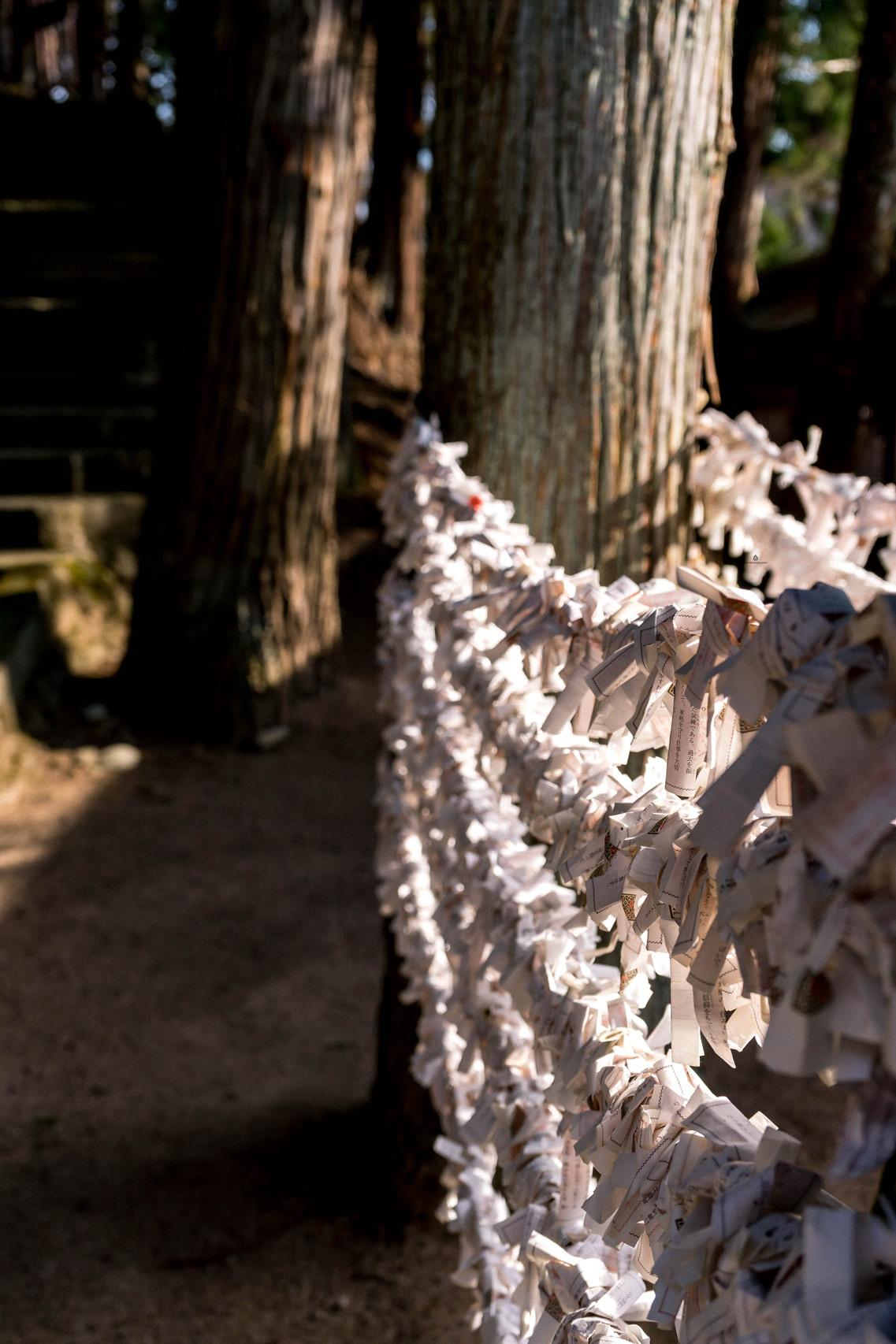 Omikuji fortunes at Sakurayama Hachimangu shrine, Takayama
