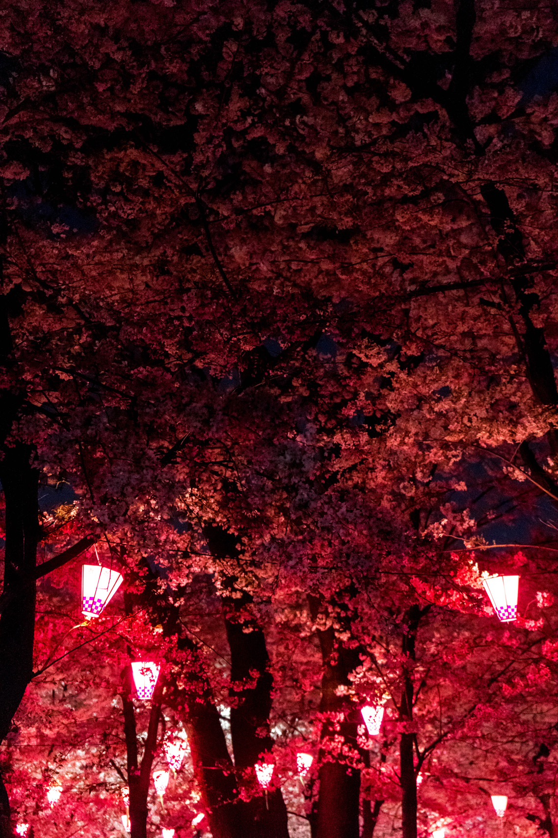 Hanami festival by night, Tsurumai park, Nagoya