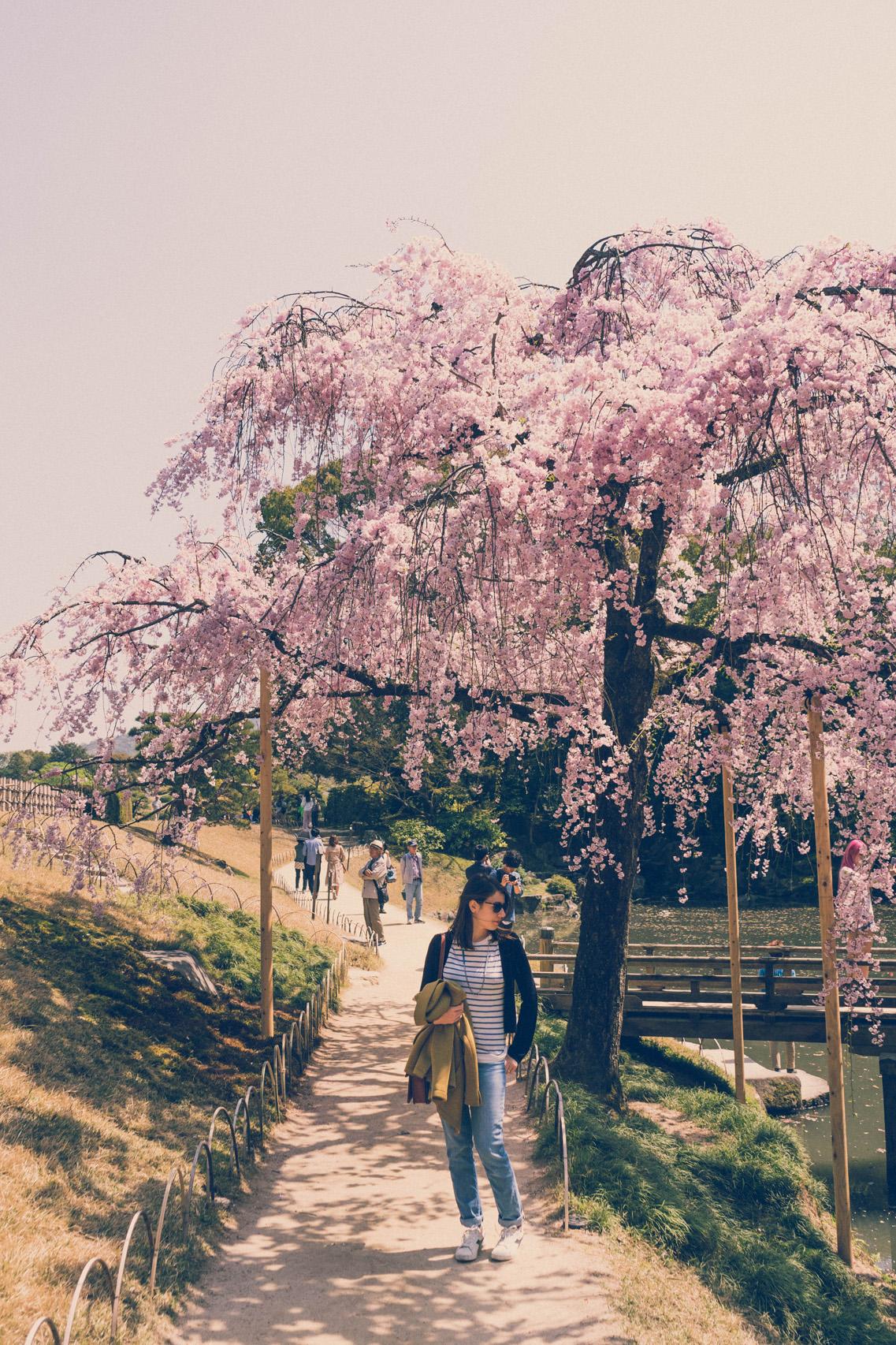 Blossoms in Korakuen garden, Okayama
