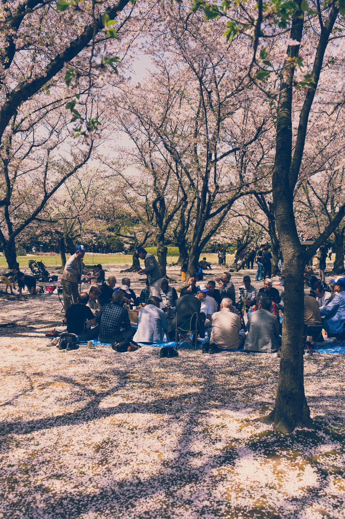 Picnic in Korakuen park, Okayama