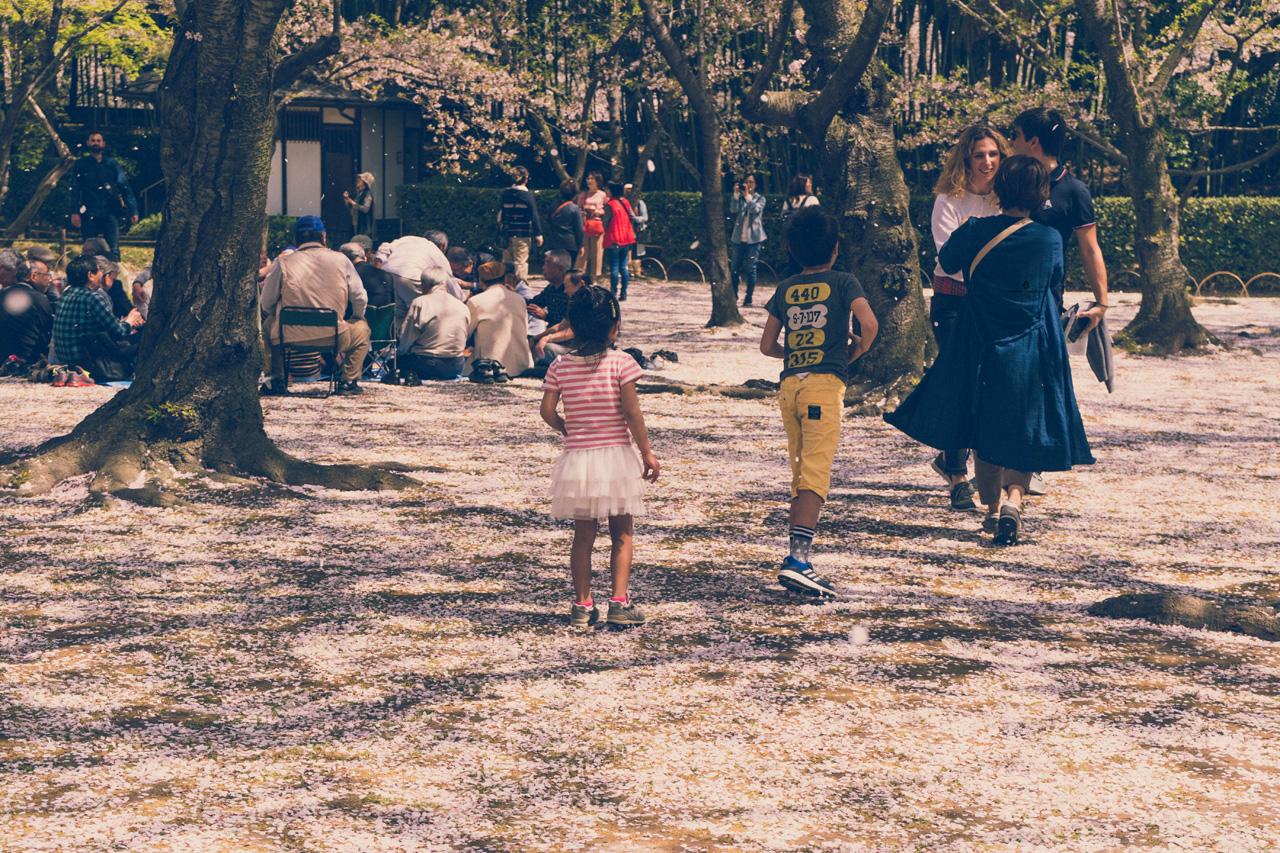 Hanami in Korakuen garden, Okayama